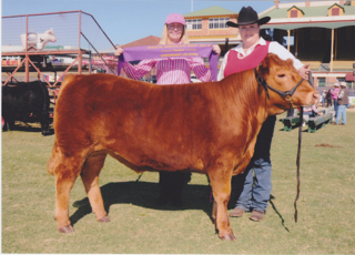 Champion Steer 2011 Ekka 2
